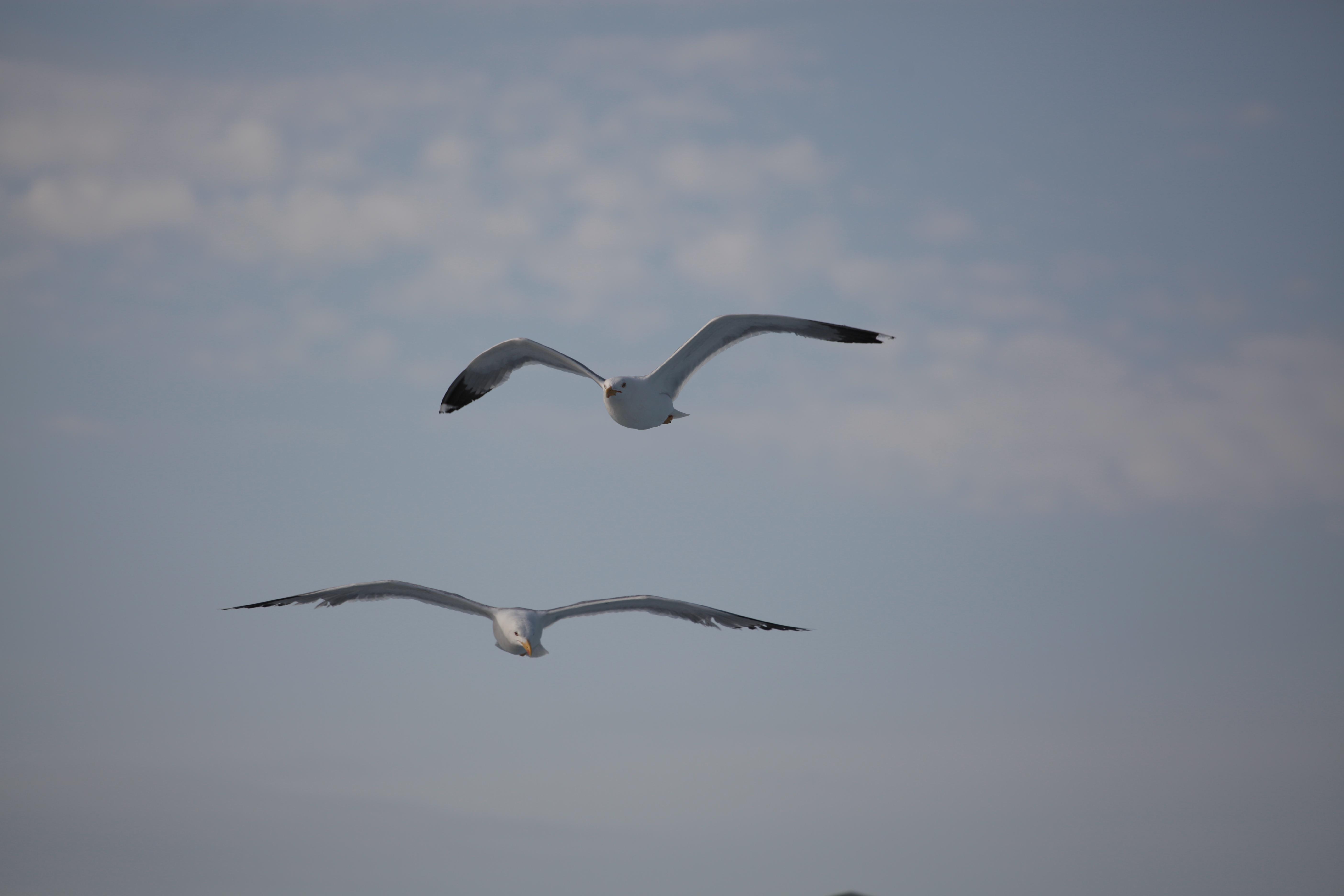 mcs_kor_2_seagulls_2014_06_23_999_65
